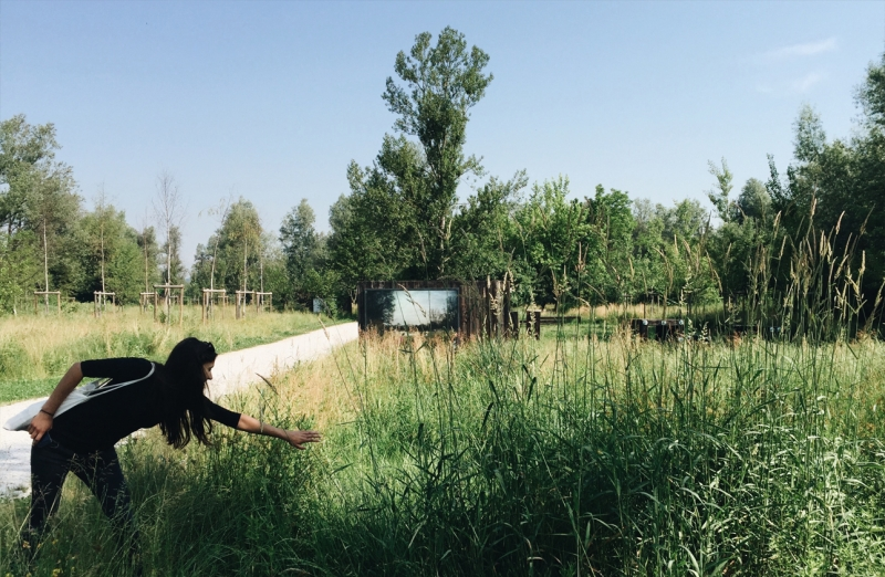 trave in šaši